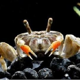 婴儿为什么对虾蟹过敏怎么办(吃虾蟹过敏怎么办怎么改善)